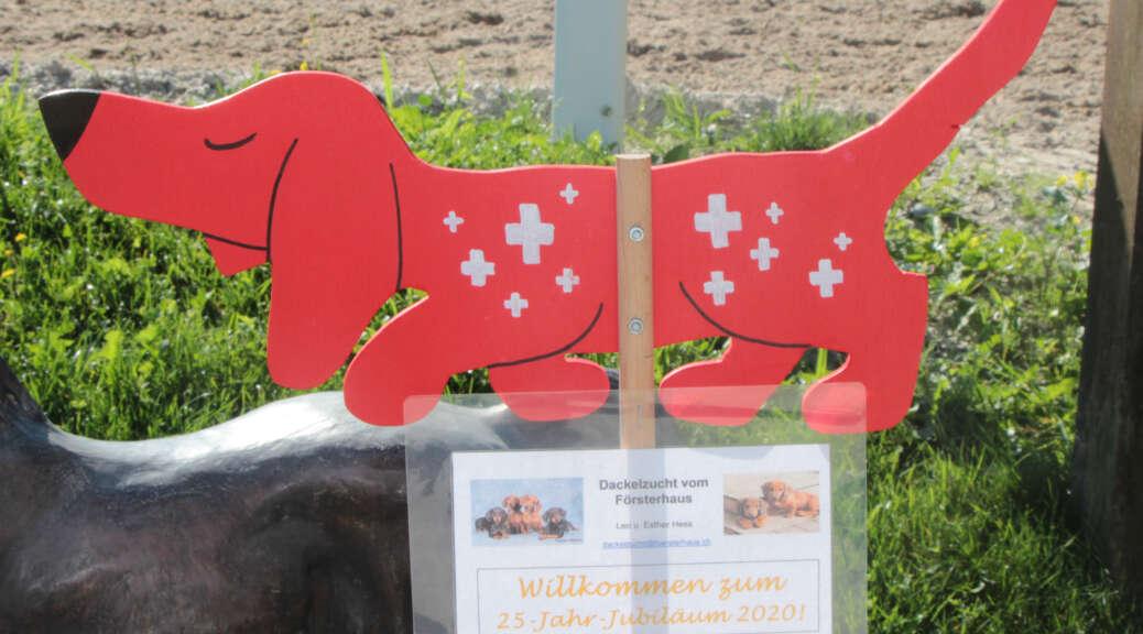 Dackelzucht Vom Forsterhaus Kurzhaar Dackelhunde Aus Zuckenriet Schweiz